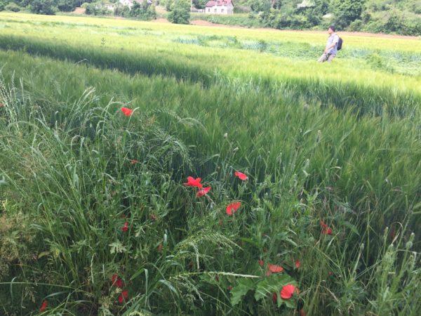 Photo d'une randonnée dans la campagne vernonnaise